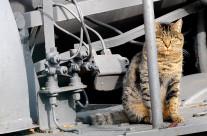 Io credo che ogni gatto ami pensare di essere l'unico gatto esistente al mondo.